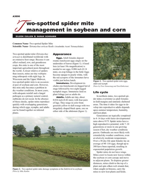 Two-spotted Spider Mite Management in Soybean and Corn