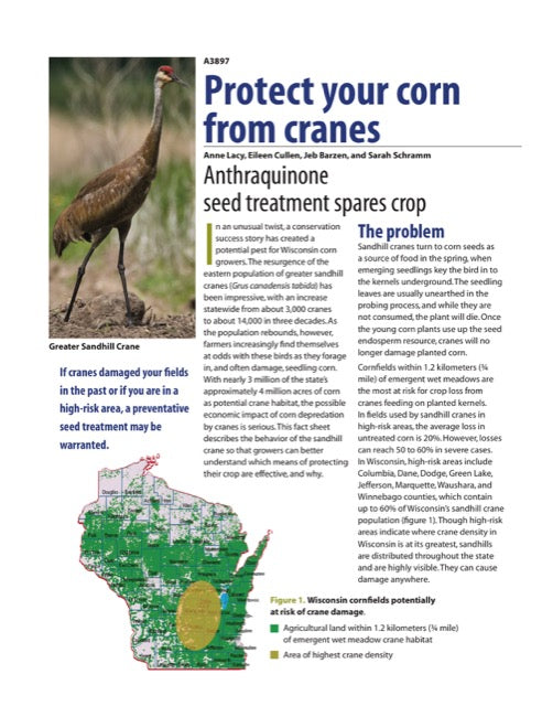 Protect Your Corn from Cranes