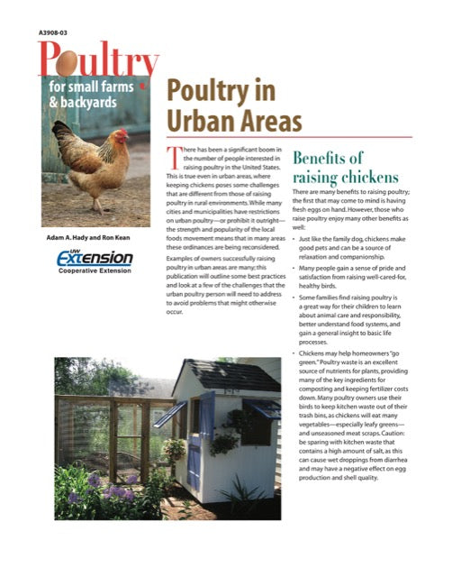 Poultry in Urban Areas