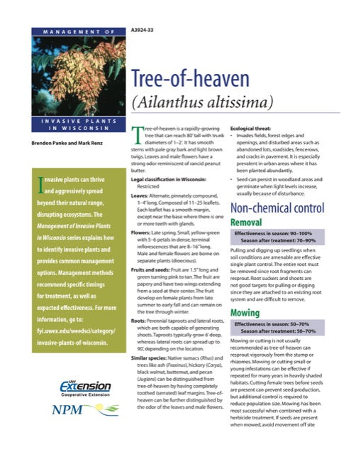 Tree-of-Heaven