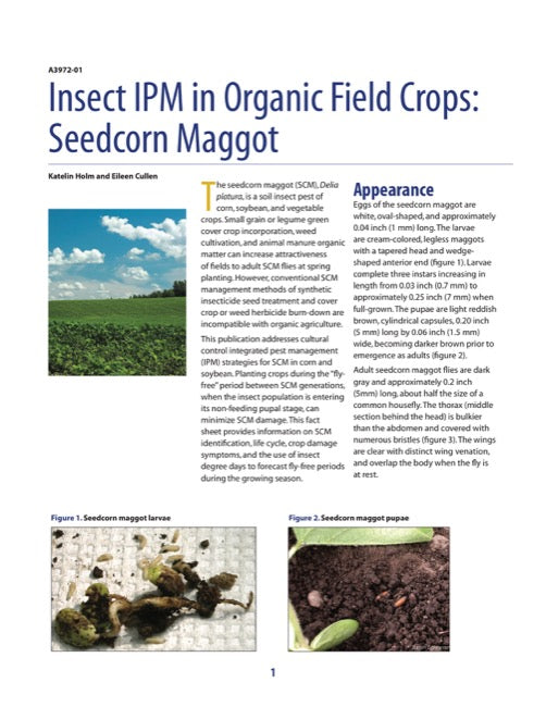 Insect IPM in Organic Field Crops: Seedcorn Maggot