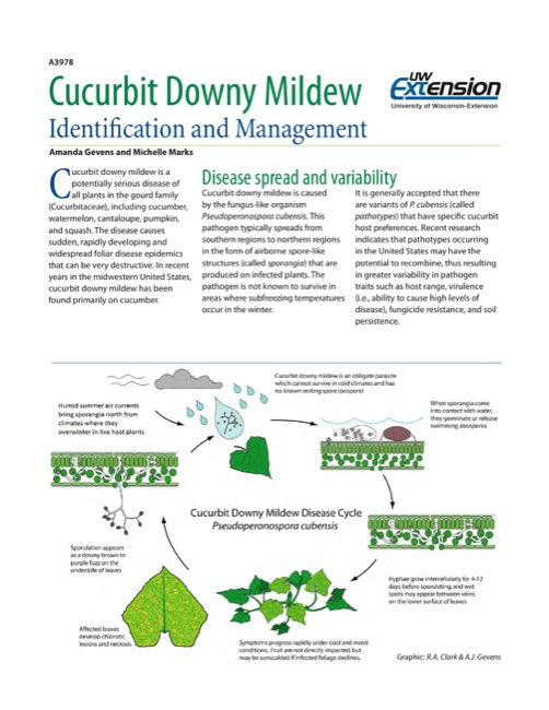 Cucurbit Downy Mildew: Identification and Management