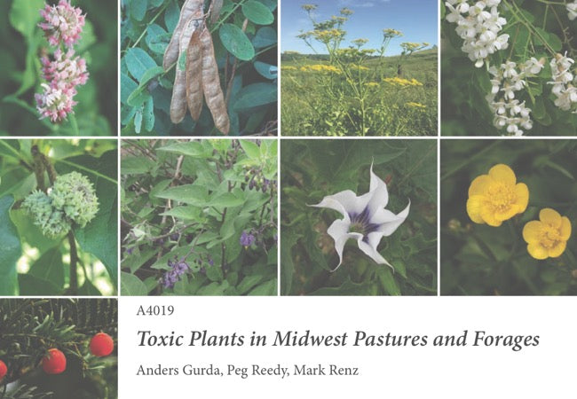 Toxic Plants in Midwest Pastures and Forages