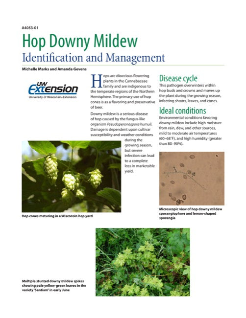 Hop Downy Mildew