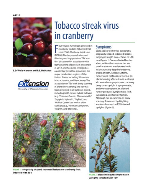 Tobacco Streak Virus in Cranberry