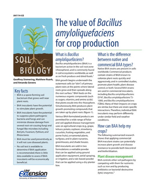 The Value of Bacillus amyloliquefaciens for Crop Production