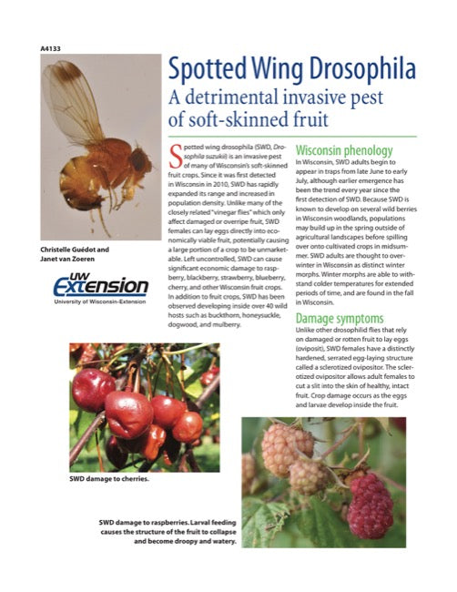 Spotted Wing Drosophila: A Detrimental Invasive Pest of Soft-skinned Fruit
