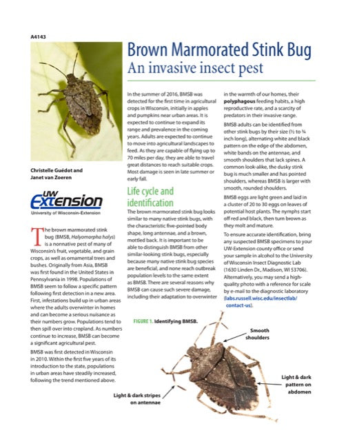 Brown Marmorated Stink Bug: An Invasive Insect Pest