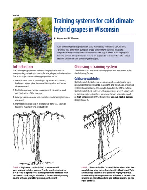 Training Systems for Cold Climate Hybrid Grapes in Wisconsin