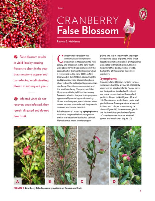 Cranberry False Blossom