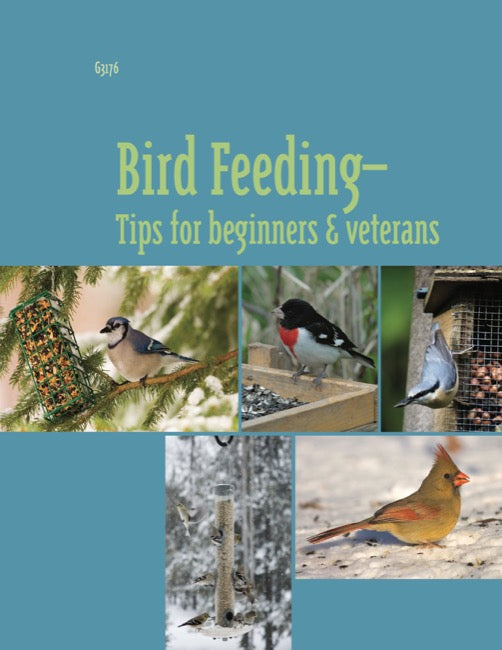 Bird Feeding: Tips for Beginners and Veterans