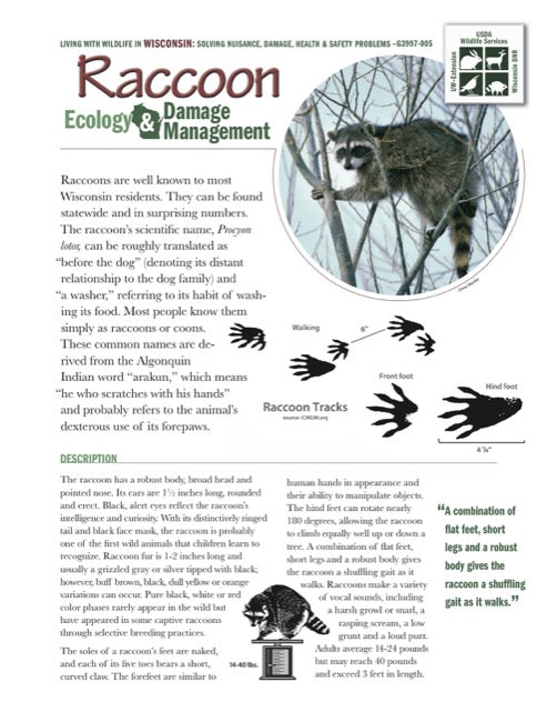 Raccoon Ecology and Damage Management