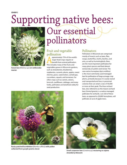 Supporting Native Bees: Our Essential Pollinators
