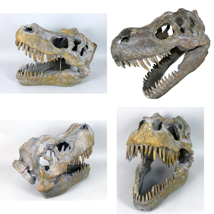 Large T-Rex Dinosaur Skull Fossil Ornate Ornament Centre Piece