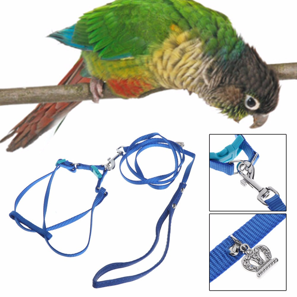 Cute bird Leash