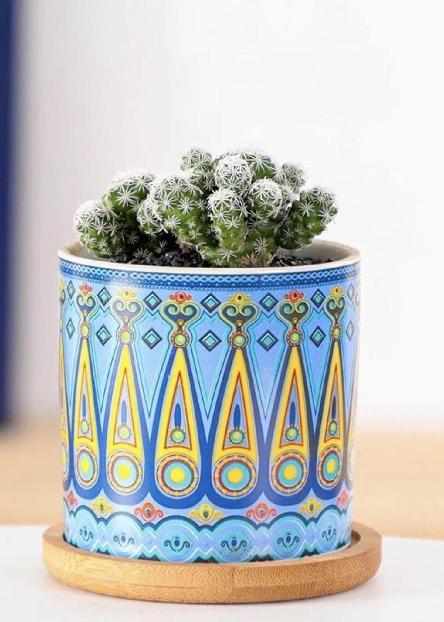 Boho Small Plants 4-Pots Set