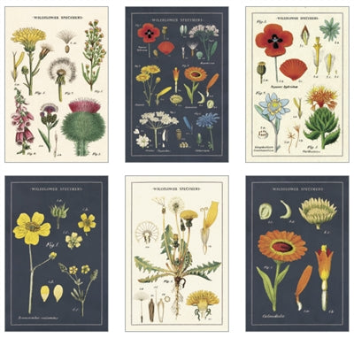 Boxed Postcards Wildflowers Assortment