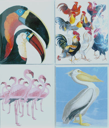 Single Card Assortment NHM Toucan, Flamingo, Pelican, Chickens