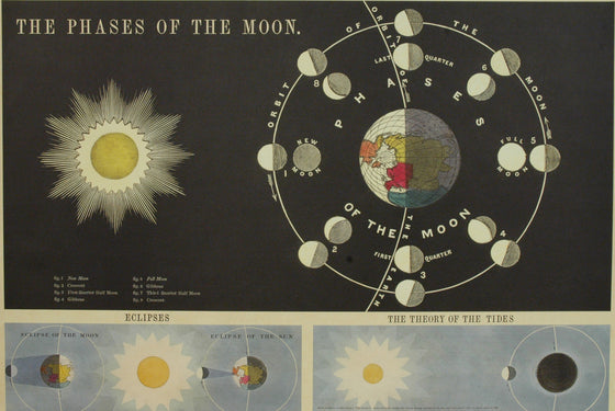 Florentine Print Phases of the Moon