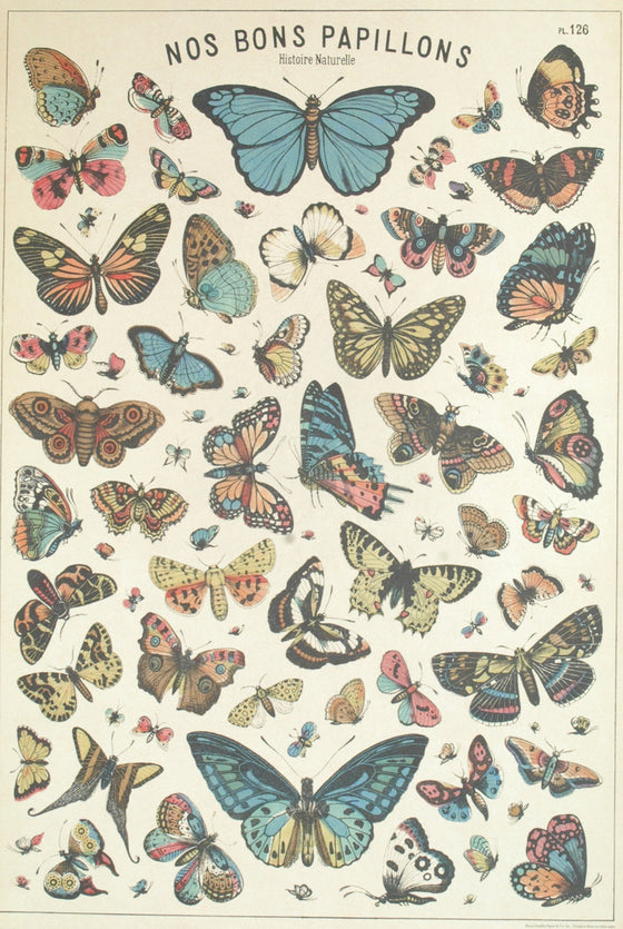 Florentine Print Butterfly Chart