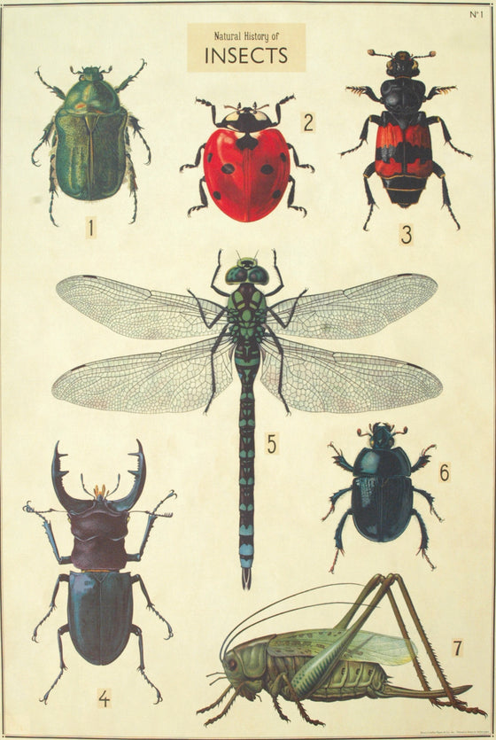 Florentine Print Natural History Seven Insects