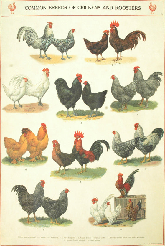 Florentine Print Chickens & Roosters