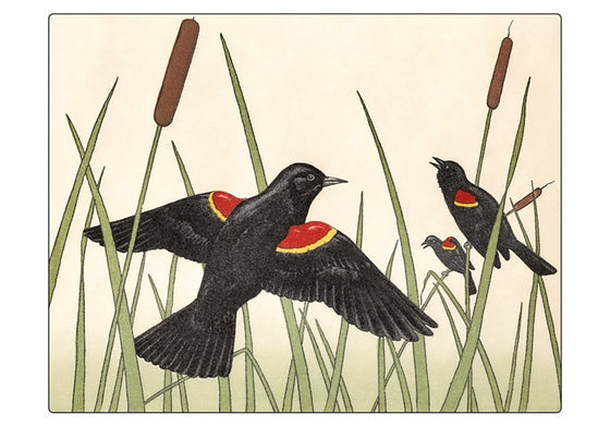 Small Boxed Cards Bebb Red-winged Blackbirds
