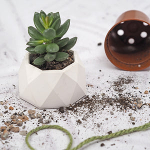 Geodesic Mini Pot