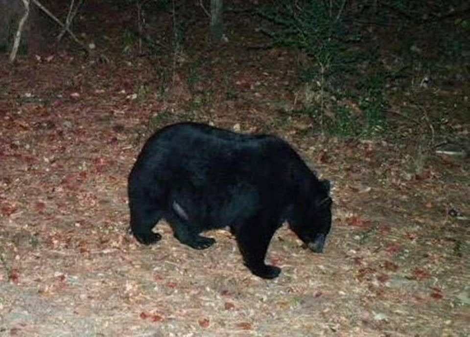 Ag Ed lesson: Wildlife Management and Counting Black Bears