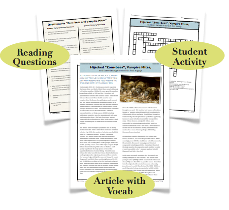 Zombees, Substitute Lesson Plan Download