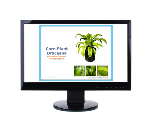 Floriculture ID, PowerPoint CD