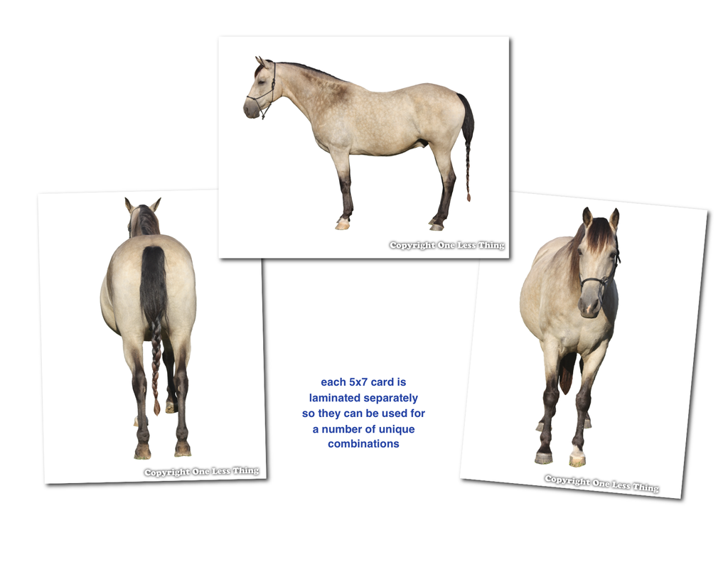Horse Judging Skill Builder Card Set 1