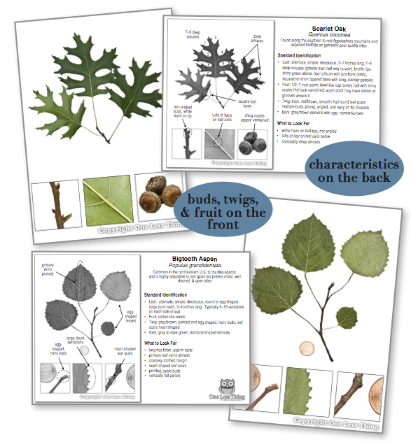 Georgia Tree ID National Supplement, IDPix Cards