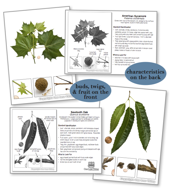 New England Tree ID National Supplement, IDPix Cards