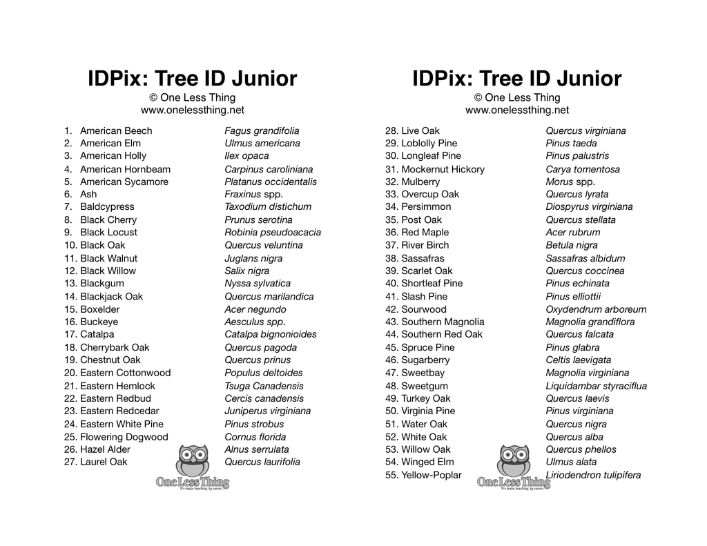 Forestry Field Day Tree ID Junior, IDPix Cards