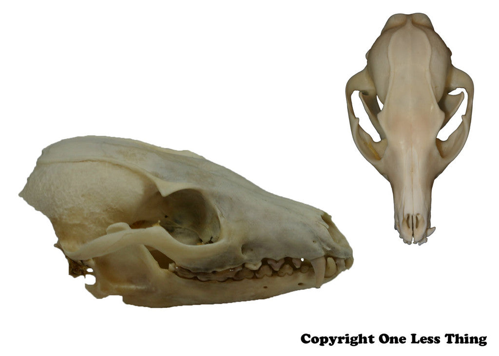 Wildlife 1: Skulls and Furs ID, IDPix Cards