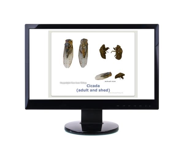 Forestry Insects and Disorders ID, PowerPoint Downloads