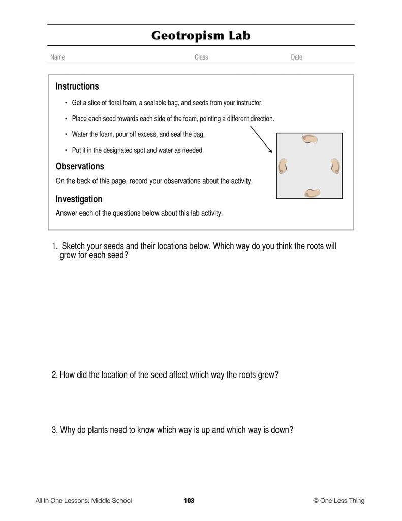 6-09 Plant Anatomy, Lesson Plan Download - One Less Thing