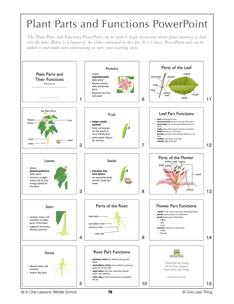 8-08 Plant Parts and Functions, Lesson Plan Download - One Less Thing