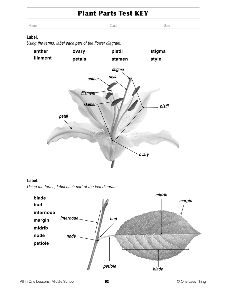 8-08 Plant Parts and Functions, Lesson Plan Download - One ... - photo#1