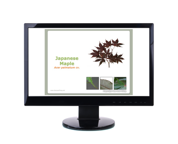 Nursery Landscape ID, PowerPoint CD