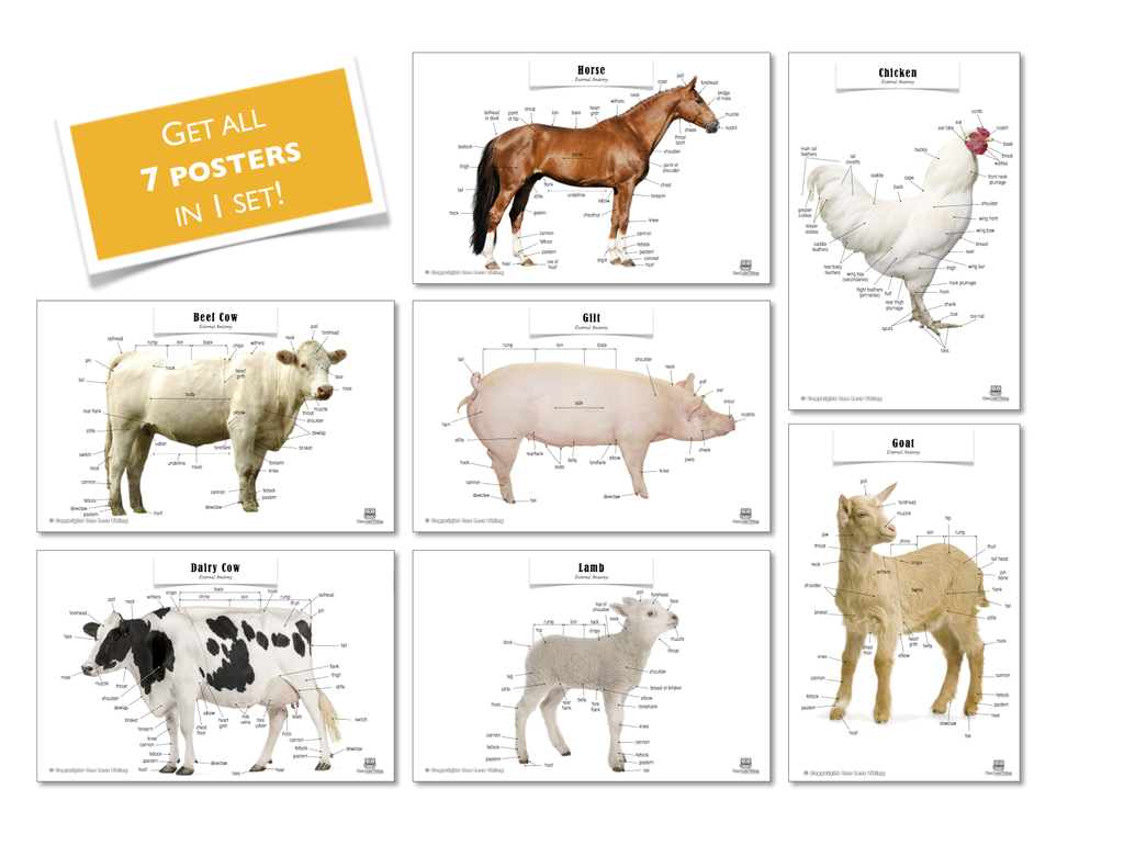 Livestock Posters, Set of 7 - One Less Thing