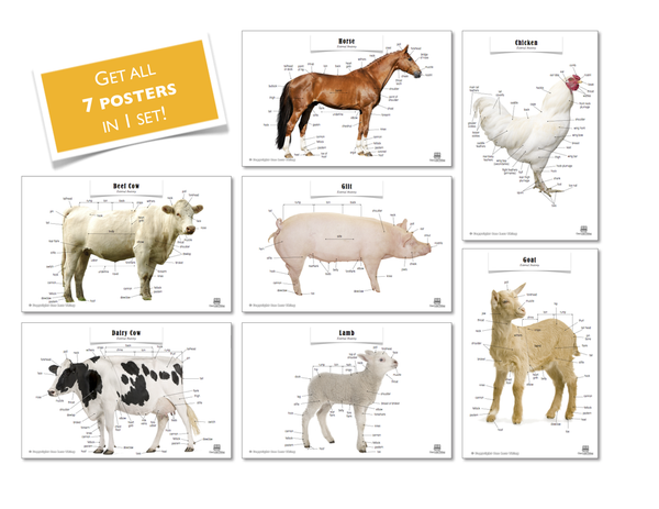 Livestock Posters, Set of 7