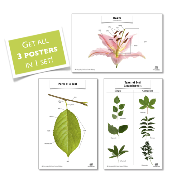 Plant Posters, Set of 3
