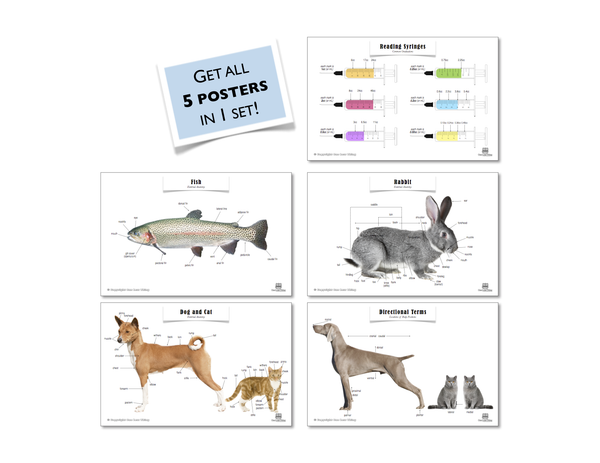 Veterinary Science Posters, Set of 5