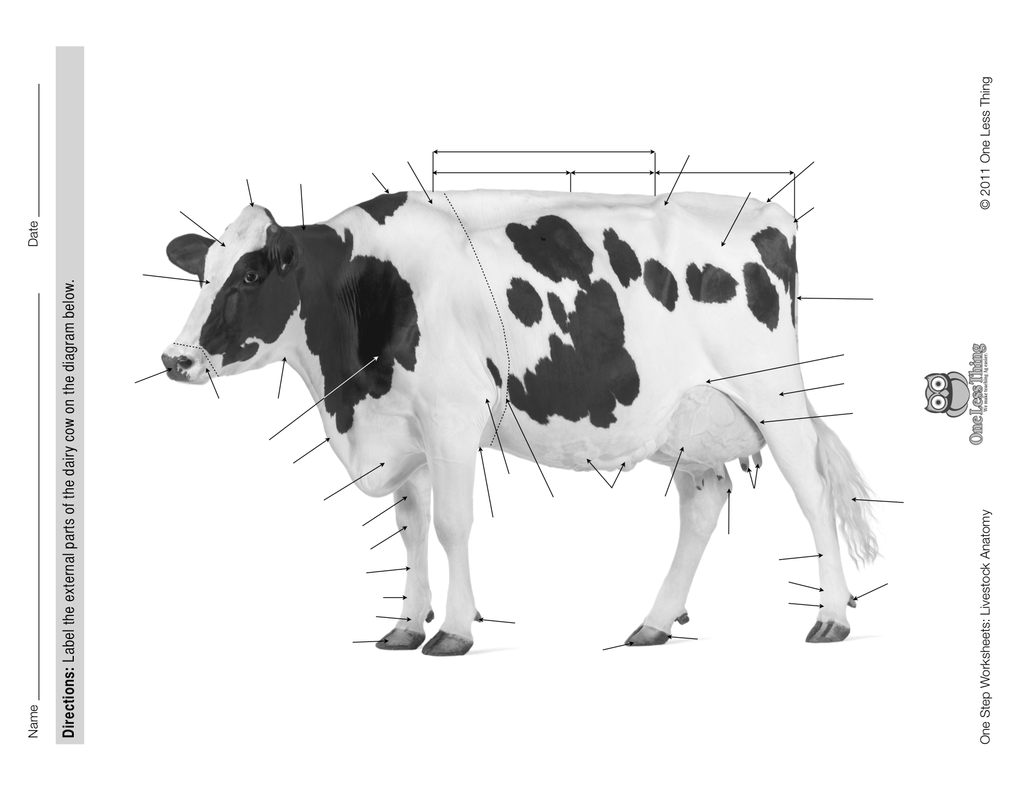 Livestock Anatomy Package, PowerPoint & Worksheet Downloads - One ...