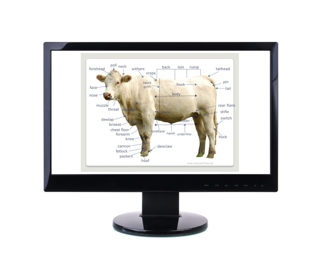 Livestock industry one less thing livestock anatomy package powerpoints worksheets robcynllc Gallery