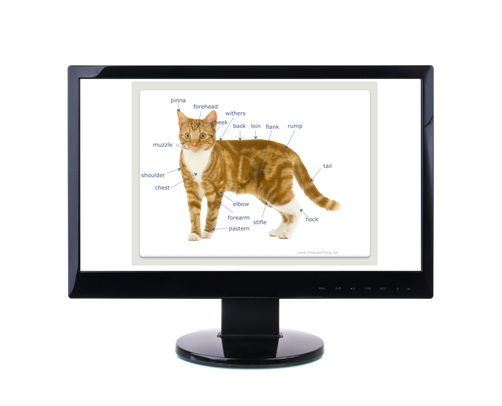 Small Animal Anatomy, PowerPoint & Worksheet Downloads - One Less Thing