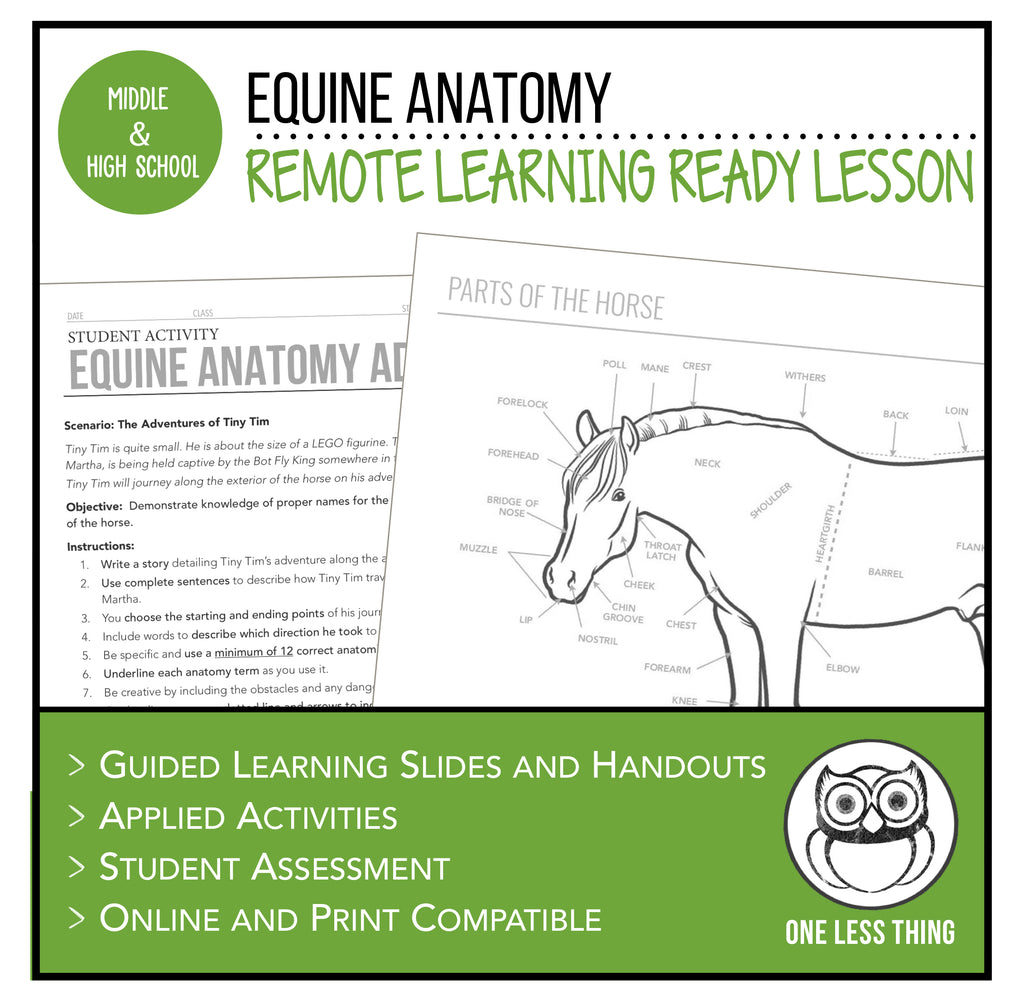 Equine Anatomy, Remote Learning Ready Lesson