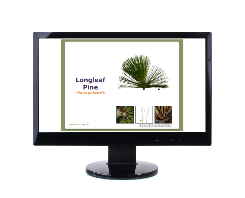 Forestry Tree ID, PowerPoint Downloads